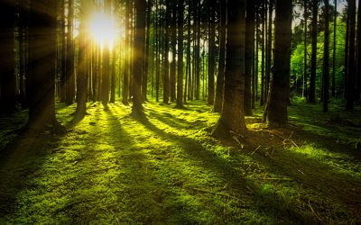 ISO Standards – Can't see the wood for the trees?